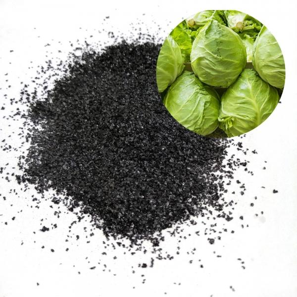 Seaweed Extract Fertilizer in Agriculture